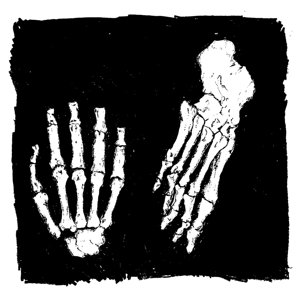 An illustration of a skeletal hand and skeletal foot.