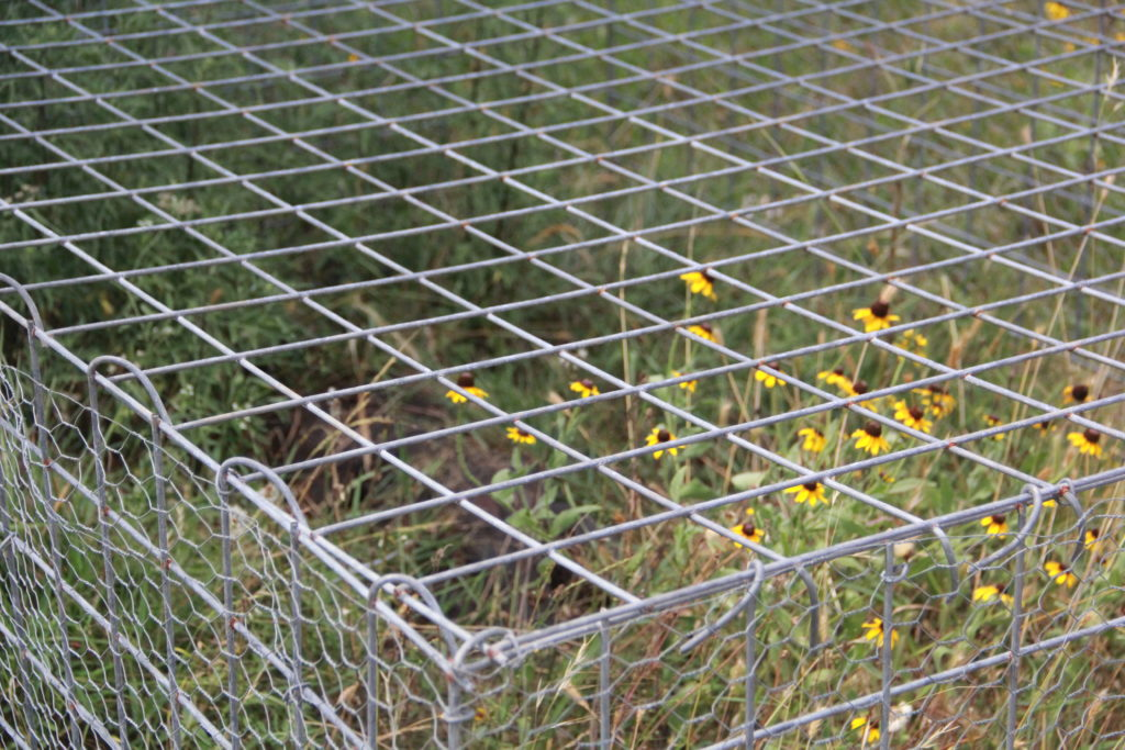 Cage and Flowers