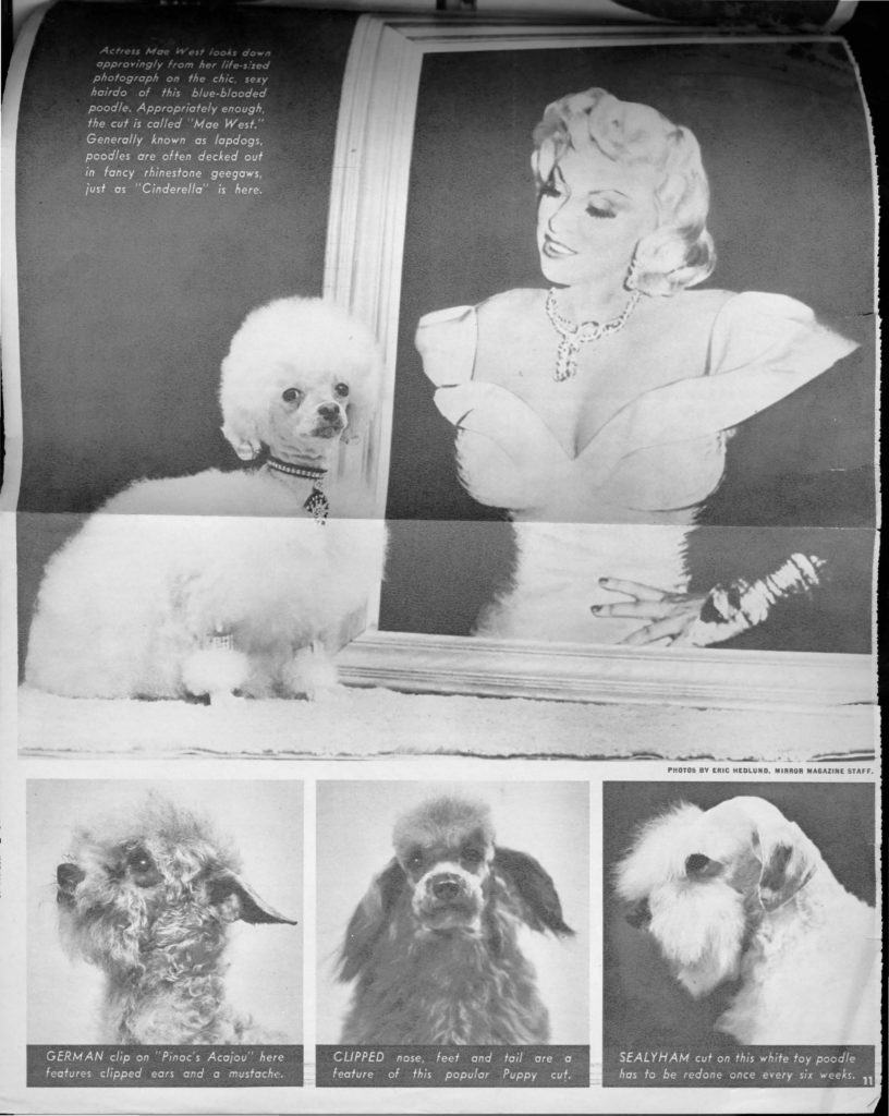 A photo of an actress next to her poodle, Cinderella, along with images of three other poodles wearing different hairstyles.