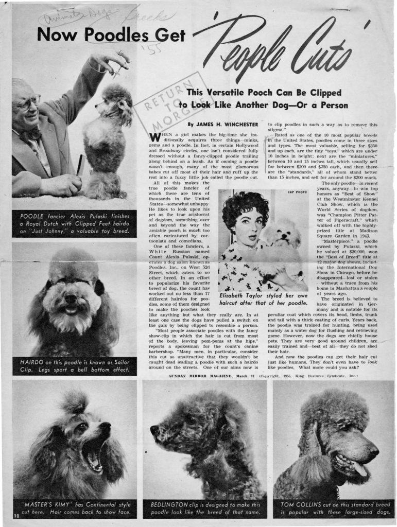 A magazine clipping with the headline: Now Poodles Get 'People Cuts' — This Versatile Pooch Can Be Clipped to Look Like Another Dog—Or a Person.
