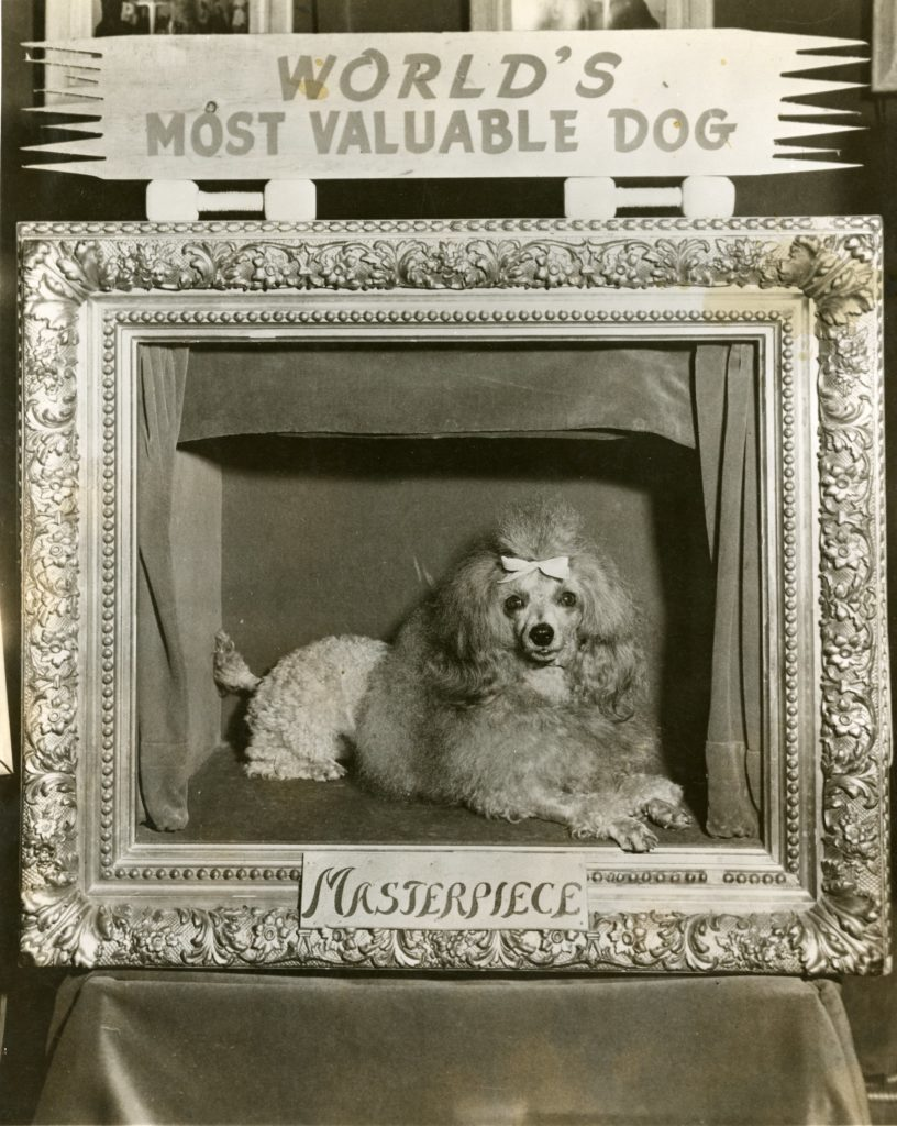 Photograph of Masterpiece, the World's Most Valuable Dog.