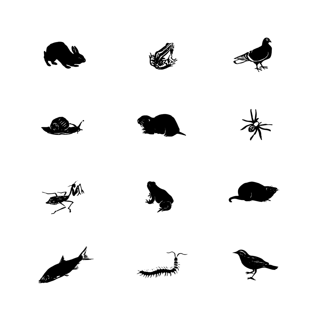 An illustration of 12 critters, including birds, centipedes, snails, and frogs.